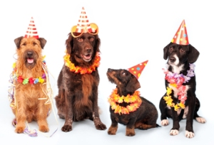 party-dogs1